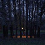 Ax_stiftelse_skog