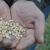 """Rapportsläpp: """"En lönsam och långsiktigt hållbar livsmedelskedja måste ha koll på sina resursflöden"""""""